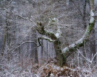 Hay Woods #8 - Jan 2021