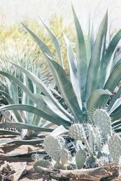 Cactus Garden #3