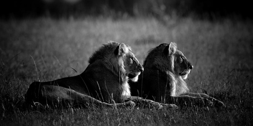 Two Kings in the Morning Light, Kenya