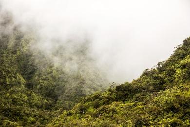 Neverland Survey Area, Kaua'i