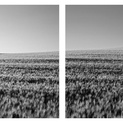 Moon Harvest Diptych