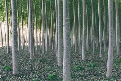 Tree Farm XV