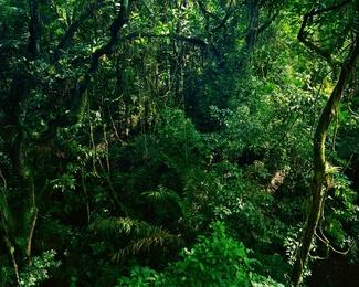 La Selva II