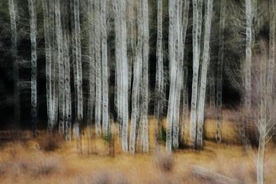 Aspen Abstract V