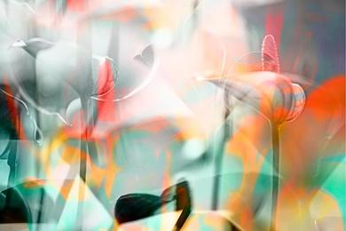 ARACEAE FLOWER 9
