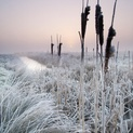 Winter Sunrise Over Marshland