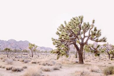 Pale Desert #2