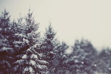 Winter Daydream #2