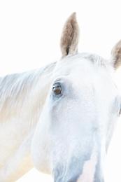 White Horse 09