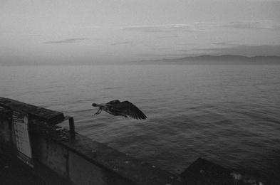 Bird of Venice