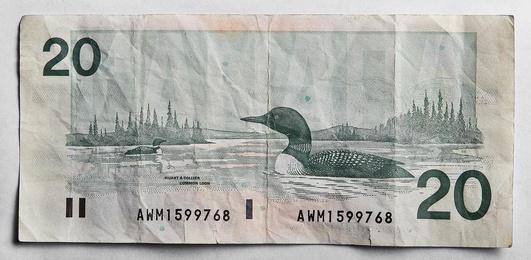 Bird Series $20