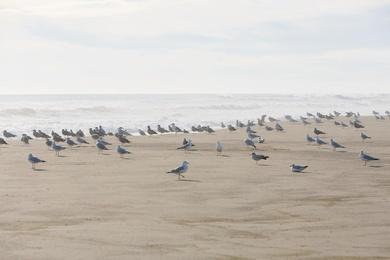 Gathering of Gulls