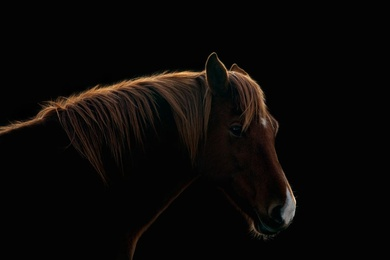 Glowing Horse