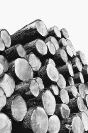 Wood Pile IV
