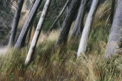 Arcadia Beach Forest III