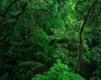 La Selva IV