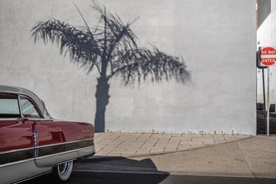 Palm Tree Packard II