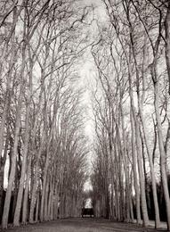 Versailles, Sepia