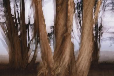 Cypress Grove Abstract II