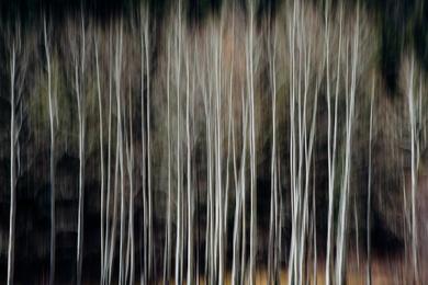 Aspen Abstract I