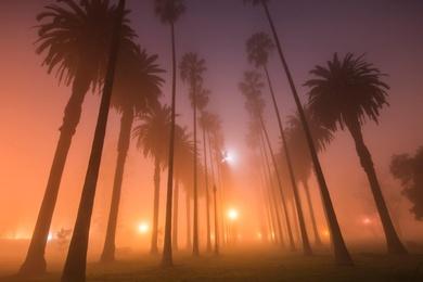 Palm Alleys #1
