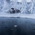 Ducks in the Hot Springs