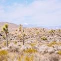 Pale Desert #3