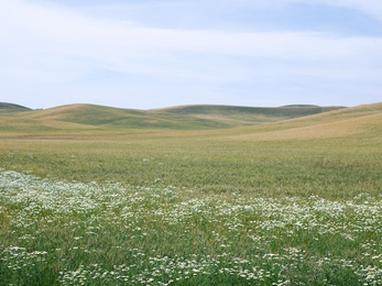 Wild About Palouse